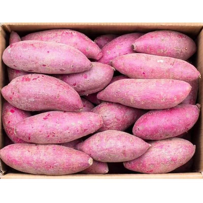 [紫罗兰紫薯批发] 优质紫罗兰紫薯选货大量供应价格1.6元/斤
