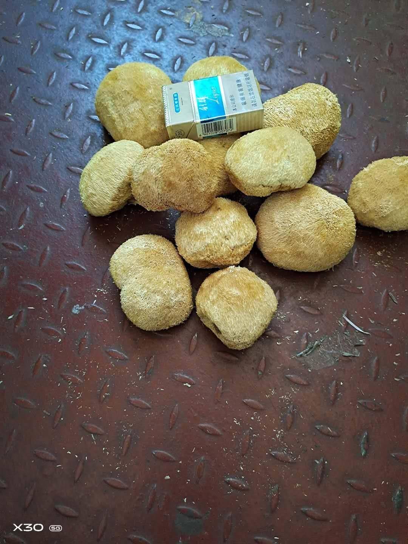 [干猴头菇批发]古田猴头菇,干货无薰硫,一手货源规格多样,量大从优价格20元/斤