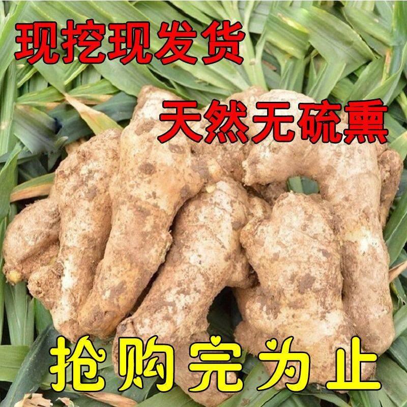 [生姜批发]临泉地域标注优质生姜老姜生姜批发黄姜老姜1/2/3/5/老生价格2.5元/斤