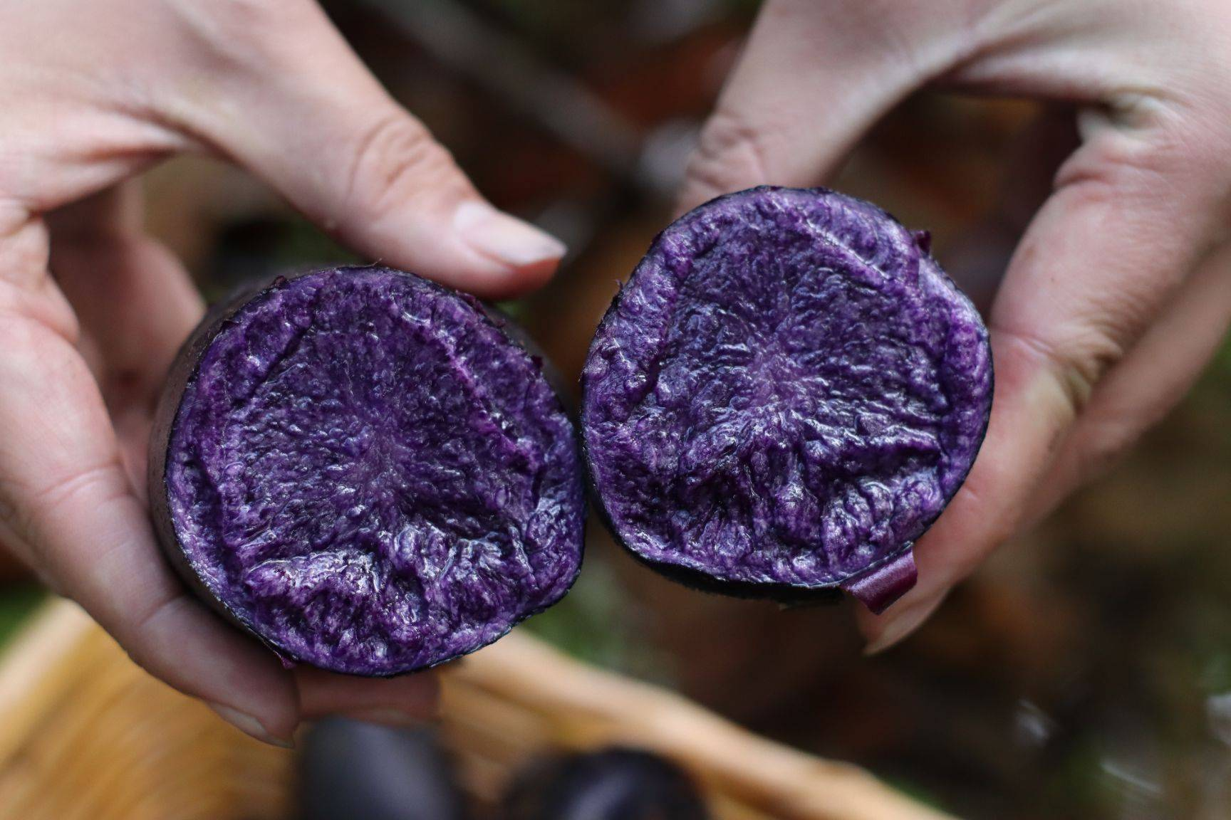[黑土豆批发]黑美人土豆  黑金刚土豆,黑土豆,彩色马铃薯价格2元/斤