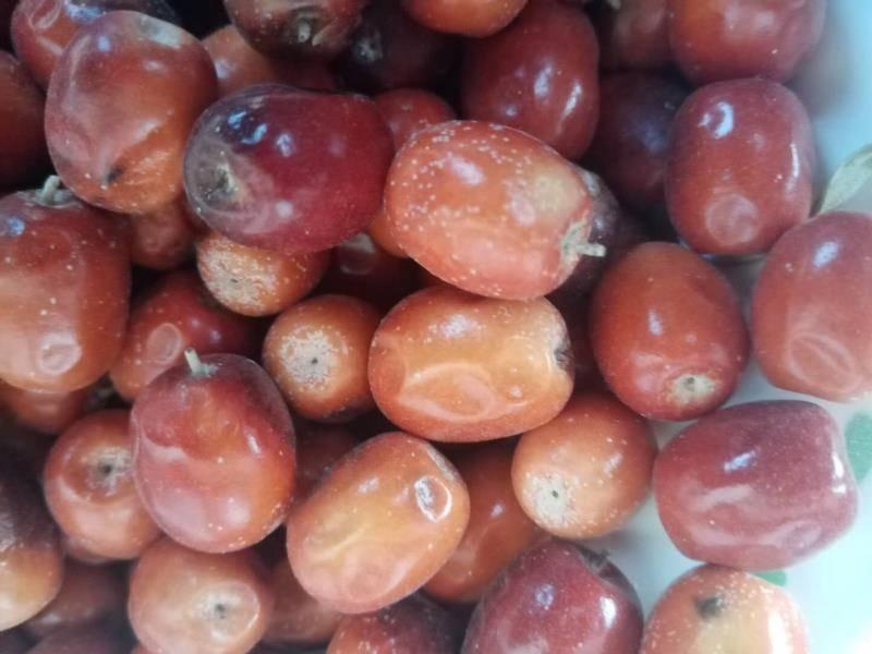 [红枣批发]民勤红枣  甘肃民勤沙枣。腾格里大漠沙生特产,口感甜美,亮丽诱人,价格45元/斤