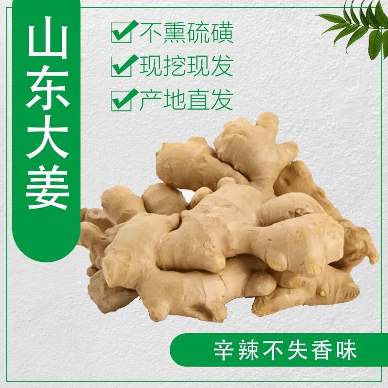 [面姜批发]山东面姜种植基地。出土新鲜的。适合大量储存用户。价格1.95元/斤