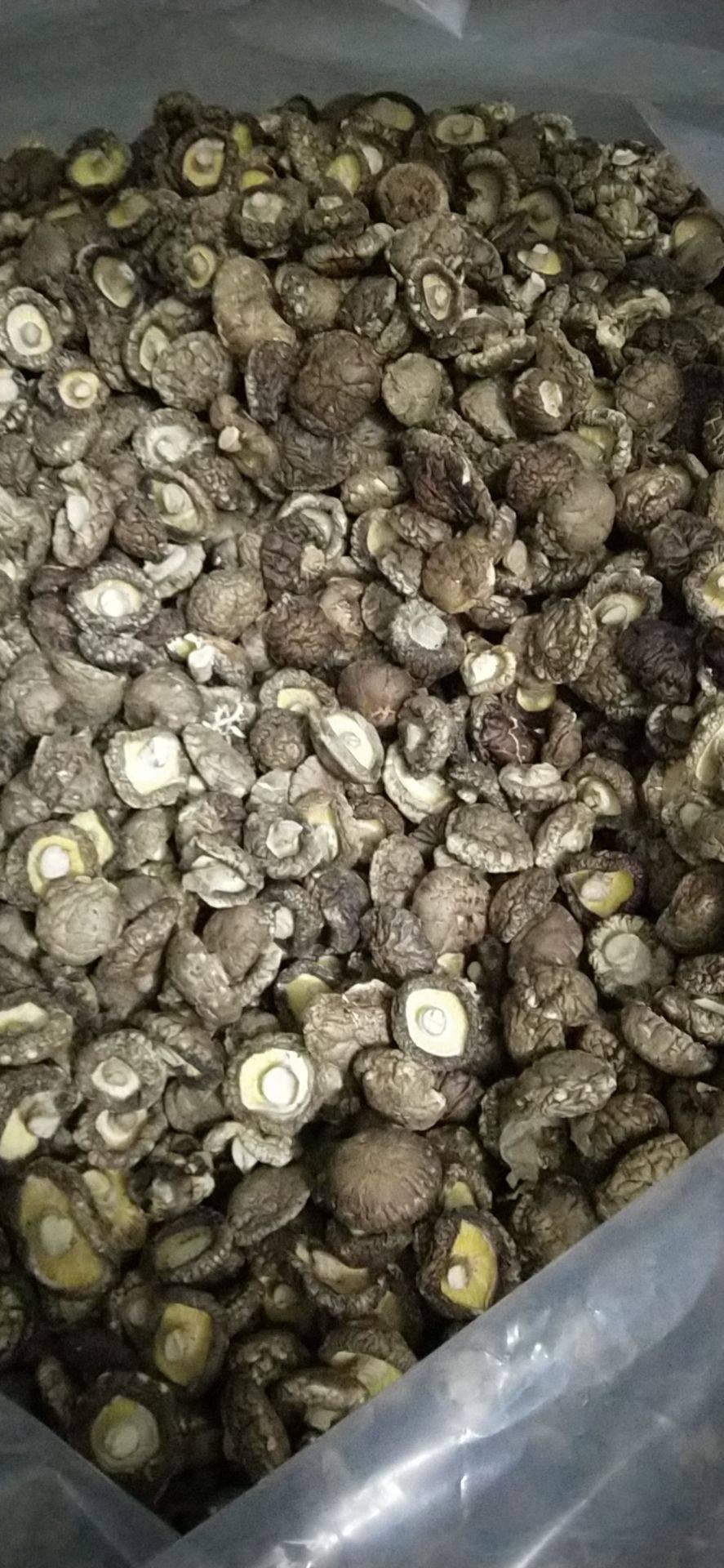 [金钱菇批发]河南内乡菇乡味香精品金钱菇1袋包邮试吃装价格25元/斤
