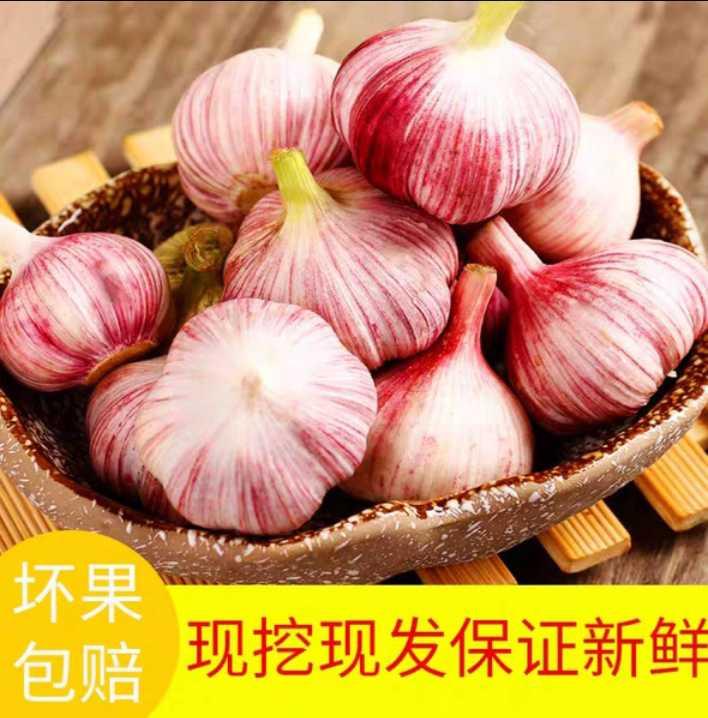 [红皮蒜批发]红皮蒜  【21年新蒜】新鲜大蒜鲜蒜非干蒜大蒜头价格16.8元/箱