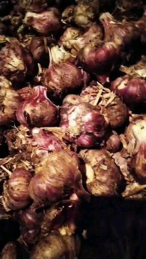 [红皮蒜批发]红皮蒜  2021年云南特产红皮紫皮多瓣蒜鲜蒜量大从优自产自销价格2.1元/斤
