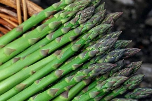 蘆筍的產地在哪?蘆筍和竹筍區別
