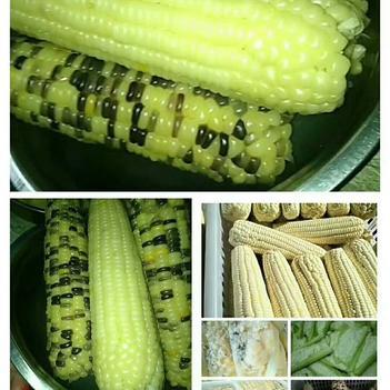 速凍糯玉米