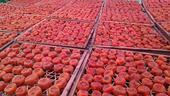 農家柿餅 箱裝