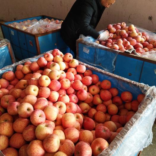 湖北省黃岡市黃梅縣紅富士蘋果 紙+膜袋 條紅 75mm以上