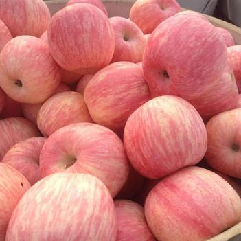 山東紅富士蘋果萬畝果園,大量直銷一手貨源