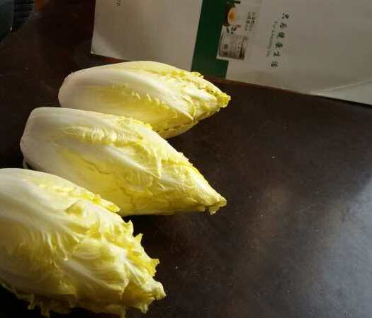 河北省邢臺市威縣菊苣
