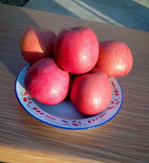 河南省三門峽市靈寶市 紅富士蘋果靈寶紅富士蘋果膜袋/紙加膜75以上