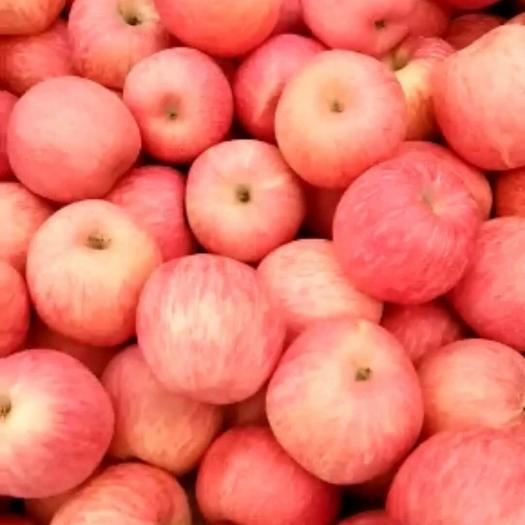 山東省臨沂市沂水縣棲霞蘋果 紙袋 條紅 75mm以上