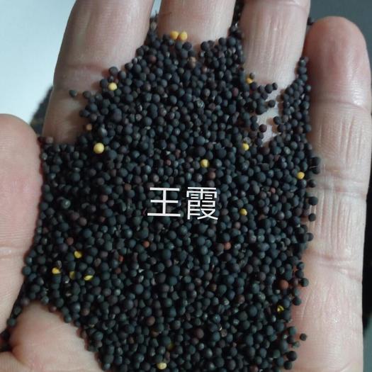 江苏省盐城市阜宁县 榨油菜籽量大价优