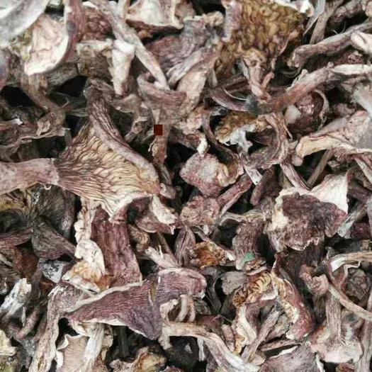 云南省大理白族自治州大理市紫丁香蘑 散装 1年以上