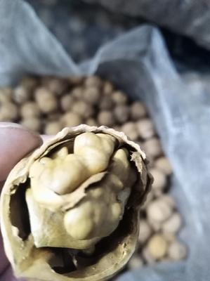 山西省忻州市原平市薄皮核桃