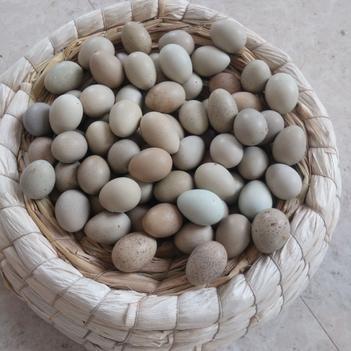 桂花雀蛋 一等蛋个大,二等蛋个头小
