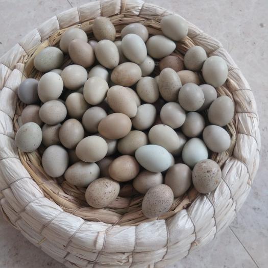 广西壮族自治区玉林市博白县桂花雀蛋 一等蛋个大,二等蛋个头小