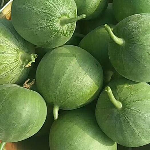 辽宁省锦州市北镇市绿宝甜瓜 0.5斤以上
