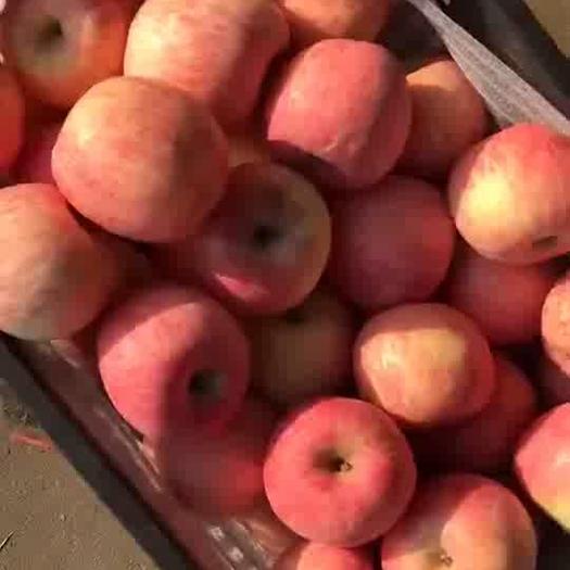 山東省淄博市沂源縣 紅富士蘋果批發價格