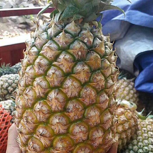 广东省湛江市廉江市徐闻菠萝 2.5 - 3斤