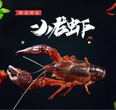 洪湖小龙虾 稻田虾 硬4.4-6.4钱  基地直供 餐饮精选