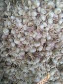 金鄉大蒜 5.5cm 多瓣蒜