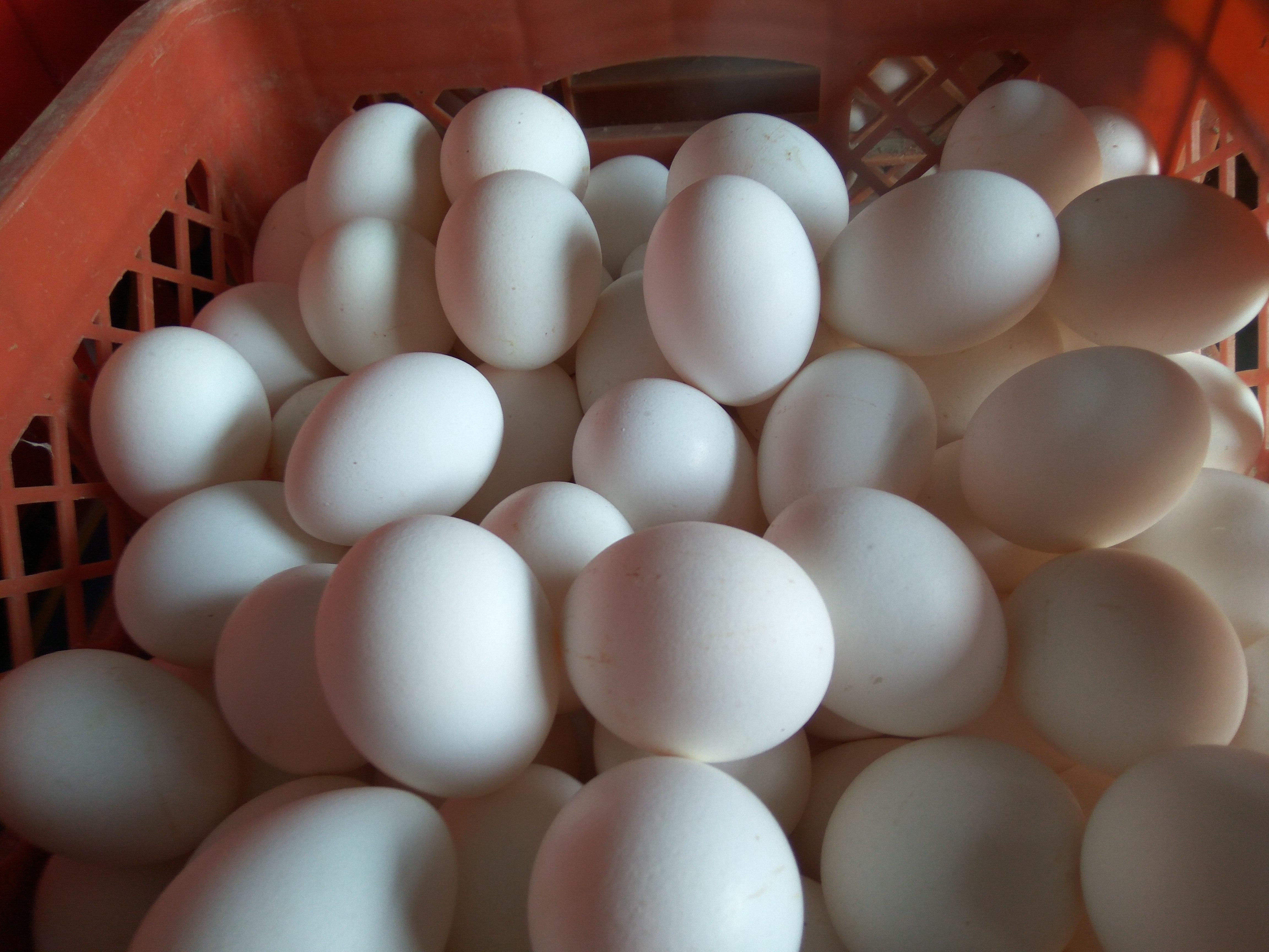[无铅皮蛋批发]无铅皮蛋 价格0.6元/个