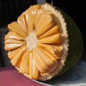海南菠蘿蜜 16-20斤果子