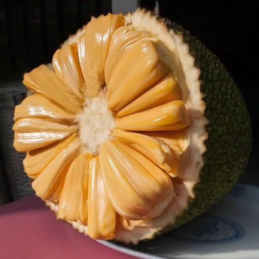 海南省三亚市崖州区海南菠萝蜜 21-25斤