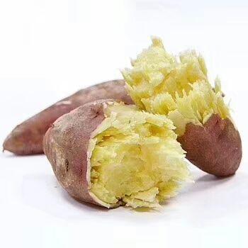 板栗薯 3兩~6兩 紅皮