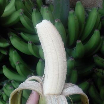 金陵香蕉 现砍现发 九斤包邮 一件代发