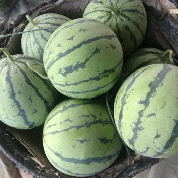 麒麟西瓜(岳阳市君山区同义果蔬种植专业合作社)专供。