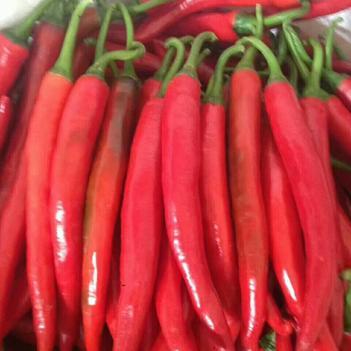 美人椒 15~20cm 红色 微辣
