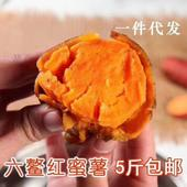 六鰲地瓜 【預售】六鰲蜜薯中果5斤裝 一手貨源~一件代發 微商電商