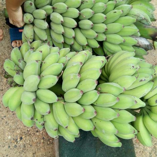 广西壮族自治区南宁市西乡塘区西贡蕉 粉蕉 8斤 香甜软糯 一件代发
