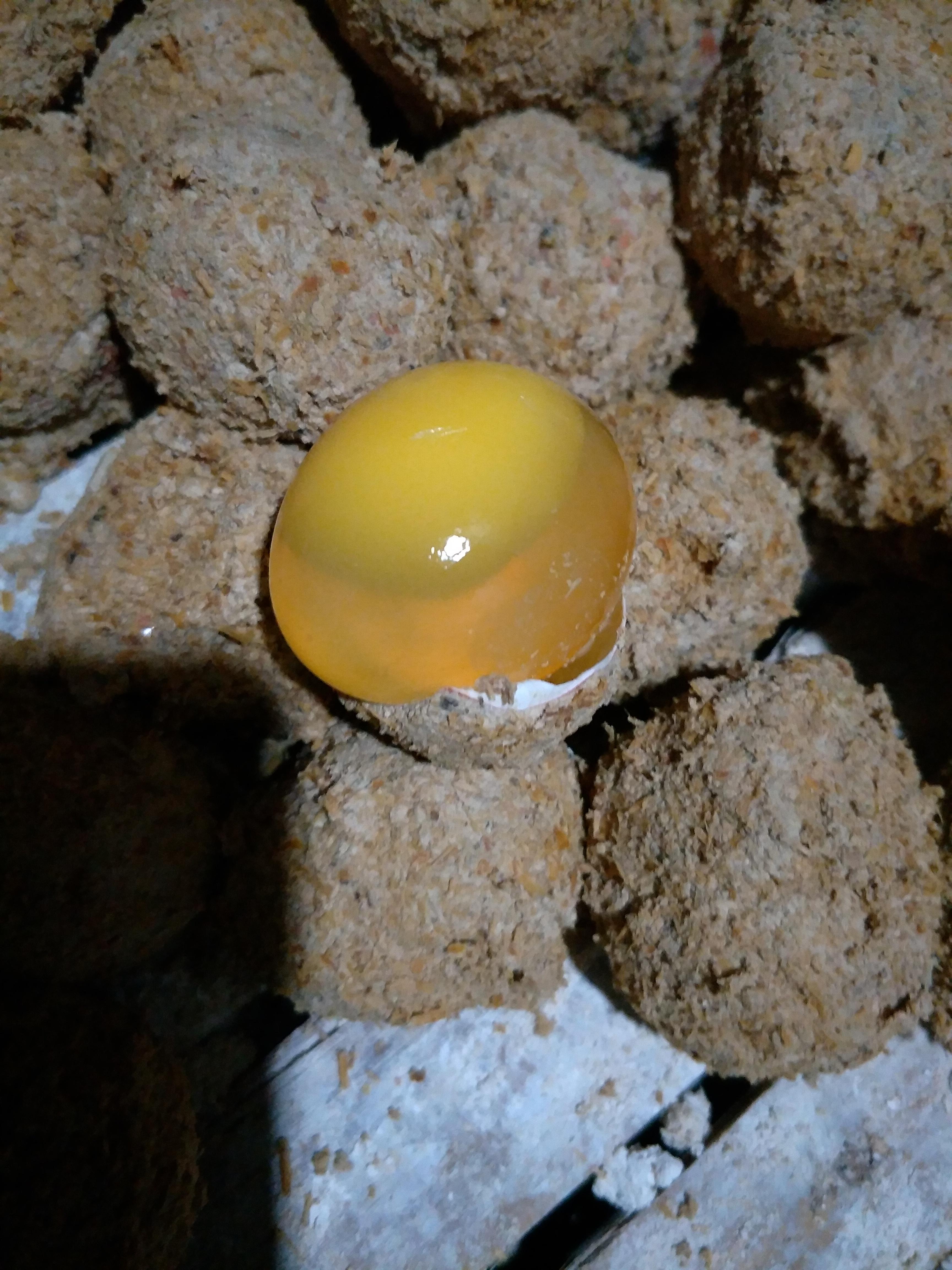 [松花鸡蛋批发]松花鸡蛋价格0.5元/个