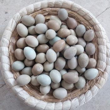 桂花雀蛋 食用 散装