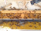 柳树花粉 新疆特产,口感香甜。