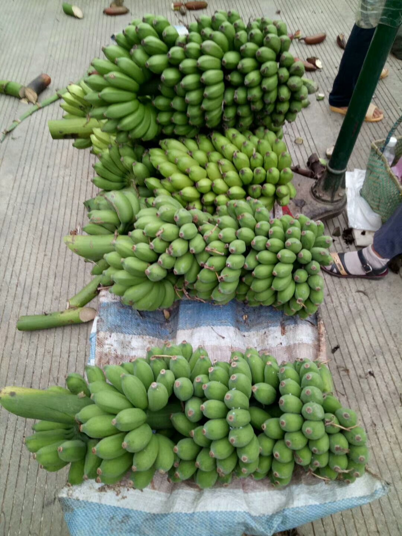 小米蕉 網紅香蕉
