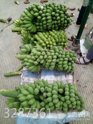 米蕉 5斤裝 小米蕉 網紅芭蕉