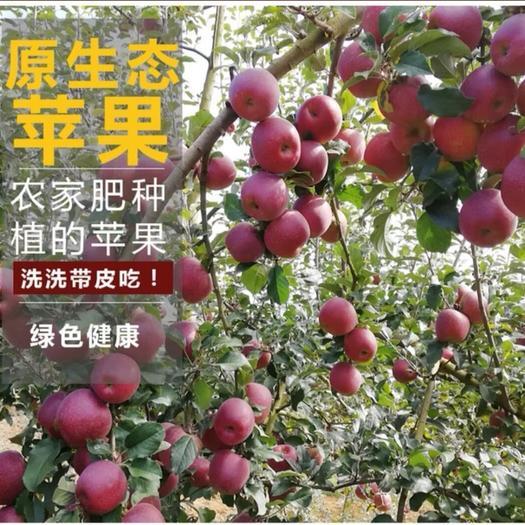 云南省昭通市昭陽區 昭通冰糖心片紅/條紅丑蘋果80-90mm果徑11.5斤包郵
