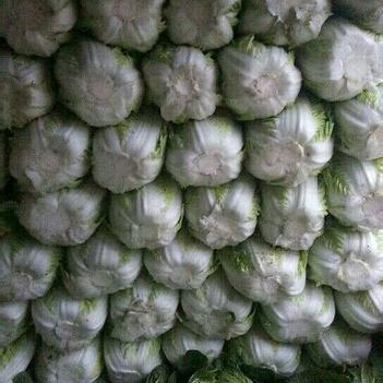 青杂三号白菜 3~6斤 净菜