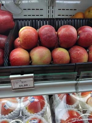 河南省許昌市鄢陵縣紅色之愛蘋果 65mm以上 全紅 光果