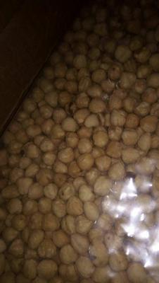 河北省石家莊市裕華區 優質好吃大顆粒榛子仁