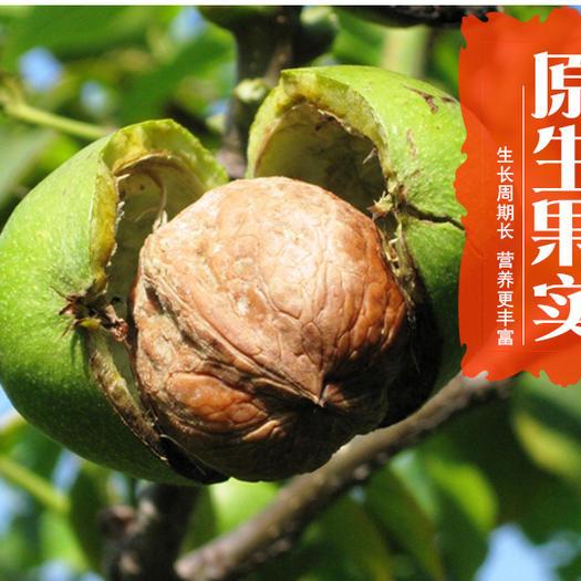 陕西省渭南市合阳县 陕西特产 香玲核桃 皮薄肉多 营养丰富