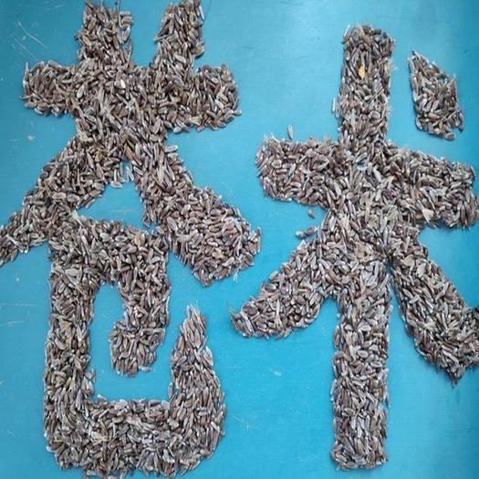 河南省三門峽市盧氏縣 北蒼術種子價格,產地批發銷售,正宗朱砂點品種