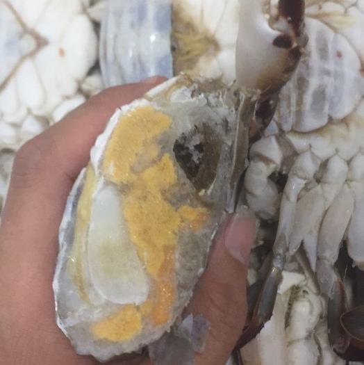 廣東省深圳市寶安區遠海梭子蟹 活凍梭子蟹 野生的新鮮的,梭子蟹,品質價格讓你絕對放心