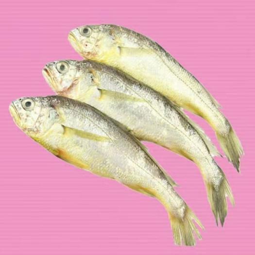 廣東省深圳市寶安區 小黃花魚高品質,整件8.8斤出量大價優 歡迎詢價 直發