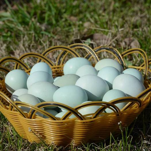 湖北省黃岡市蘄春縣 108枚送12大別山農家散養土雞蛋新鮮笨雞蛋柴雞蛋草雞蛋